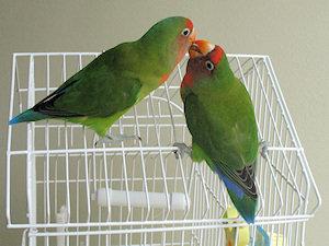 Léia e Bráulio - 26-Fev-2011