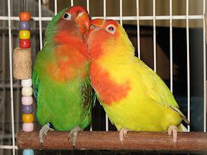 José e Edmundo - 16-Fev-2011