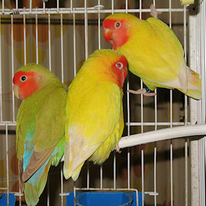 Limãozinho, Edwiges e Edmundo - 16-Fev-2011