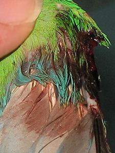 ferimento do José - 16-Fev-2011