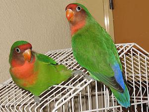 Bráulio e Léia - 16-Mar-2011