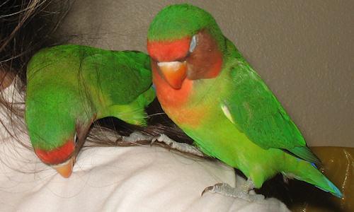 Bráulio e Léia no meu ombro - 16-Mar-2011