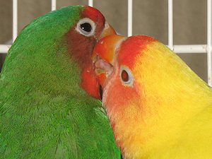 José e Edmundo - 19-Mar-2011