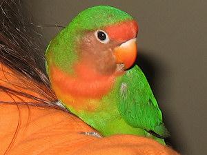 Léia no meu ombro - 22-Mar-2011