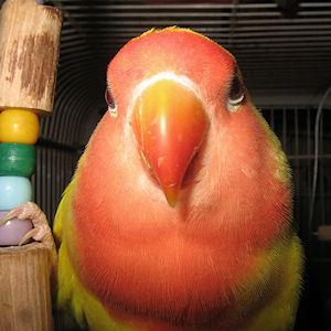 Edmundo - 16 meses - 20-Mar-2011