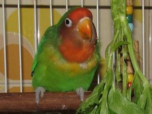 Genoveva comendo aipo - 13-Ago-2015