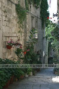 Korčula - rua com plantas - street with plants