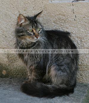 Grožnjan · gato · cat