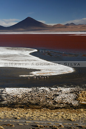 Laguna Colorada · foto/photo: Maria Adelaide Silva