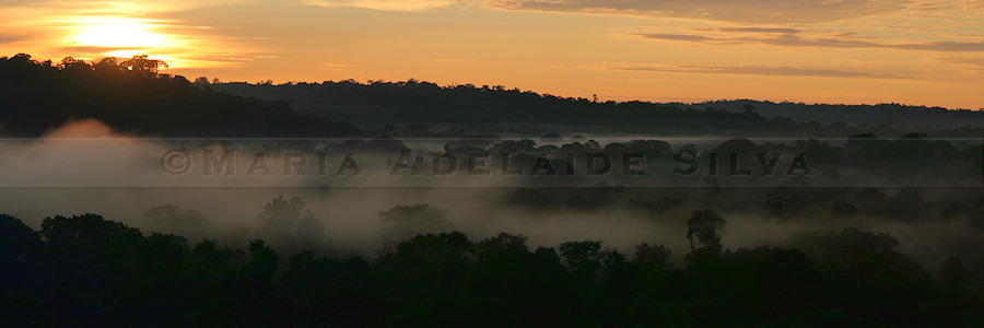 Amanhecer na Amazonia - Dawn in the Amazon